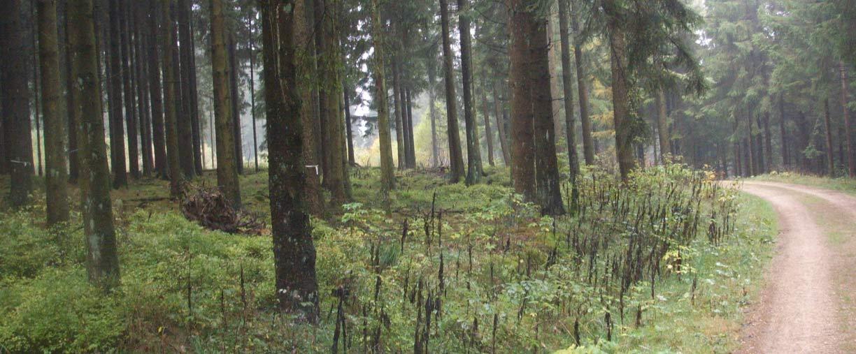 impressionen-slider-schneifelwald